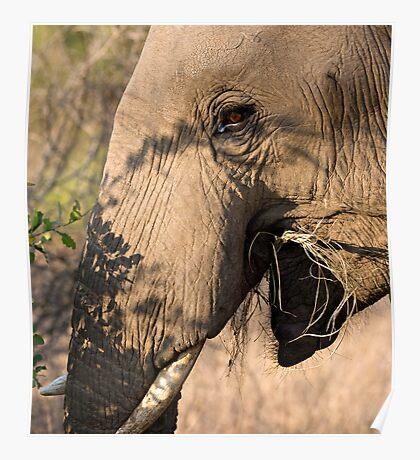 Elephant Brunch Poster