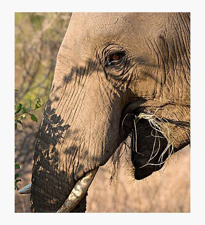 Elephant Brunch Photographic Print