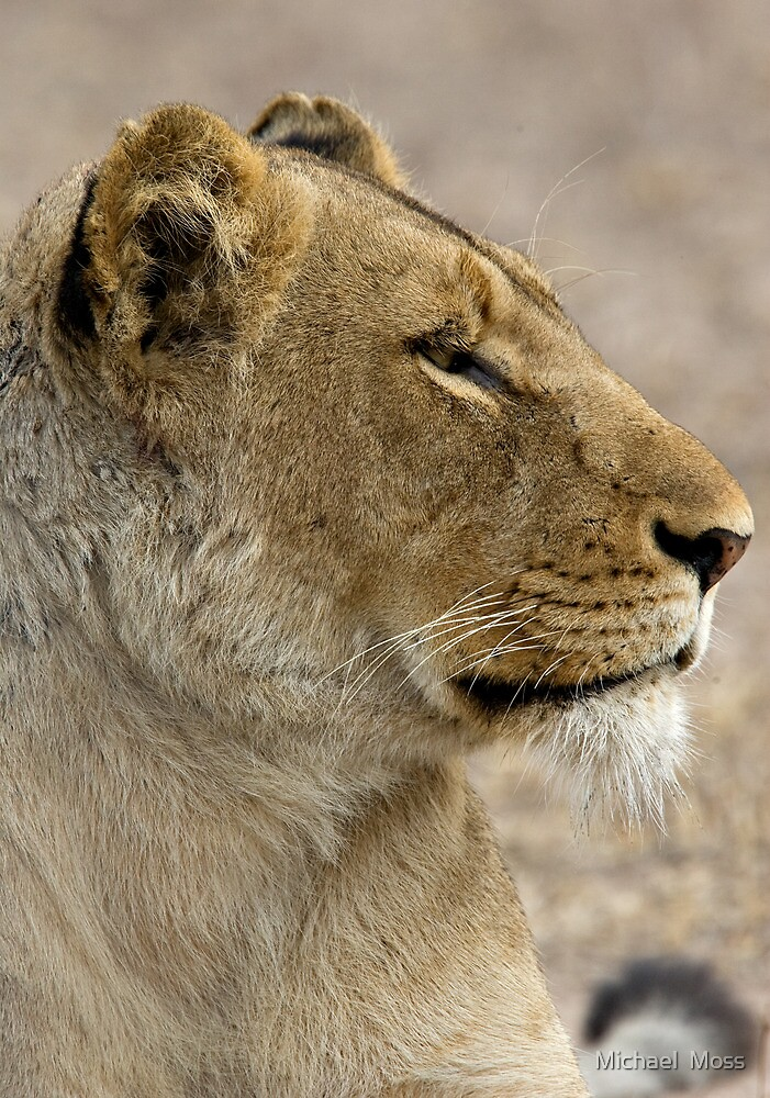 Lioness Profile by Michael  Moss