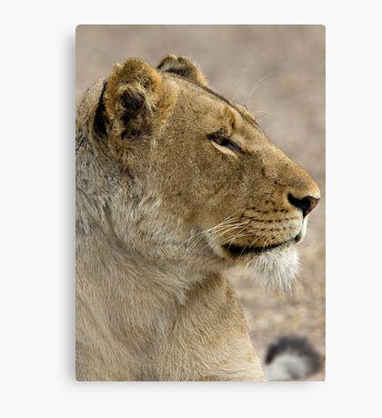 Lioness Profile Canvas Print