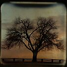 Fenceline TTV by Tia Allor-Bailey