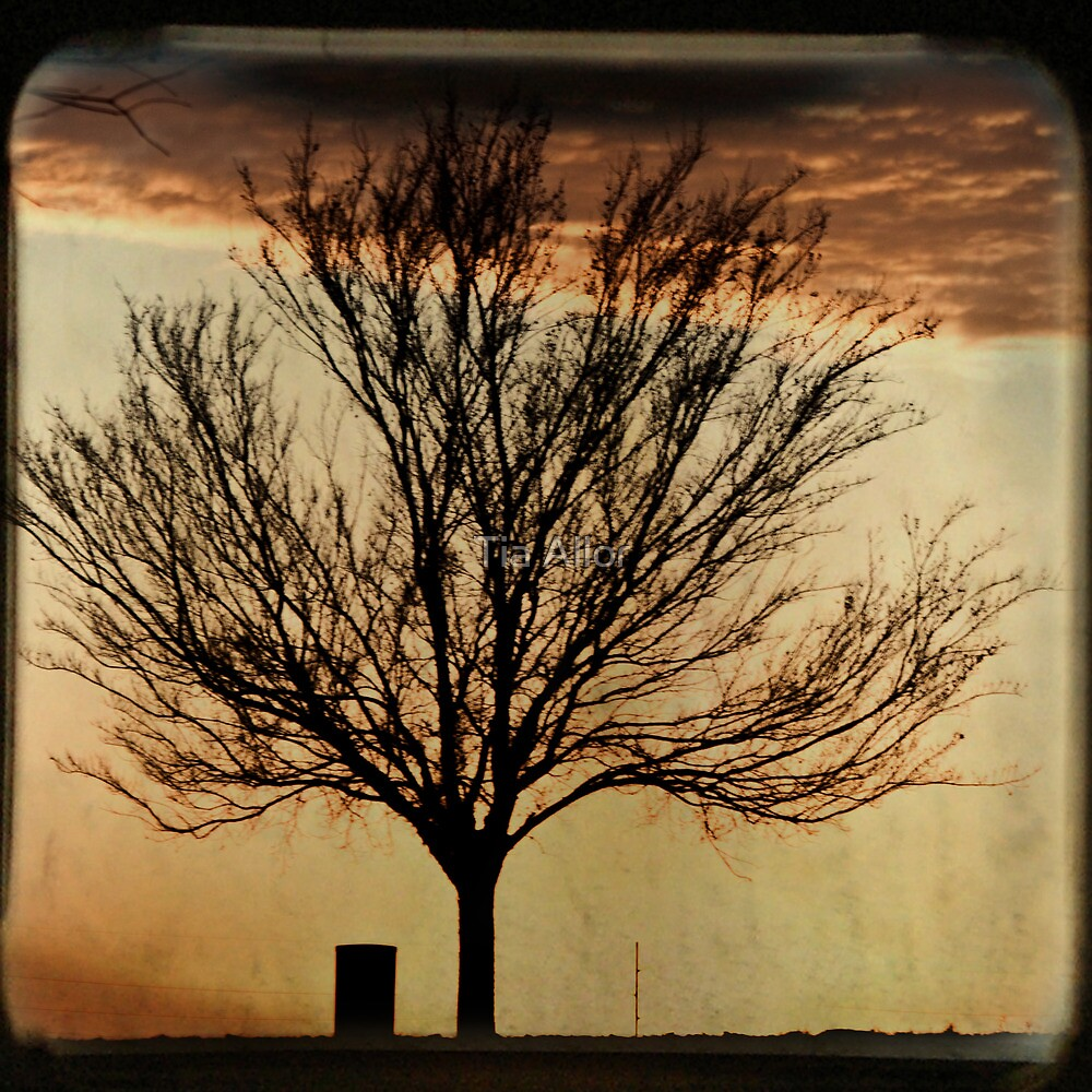 Cotton Candy Skies TTV by Tia Bailey