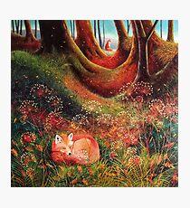 Sleeping Fox (2) Photographic Print
