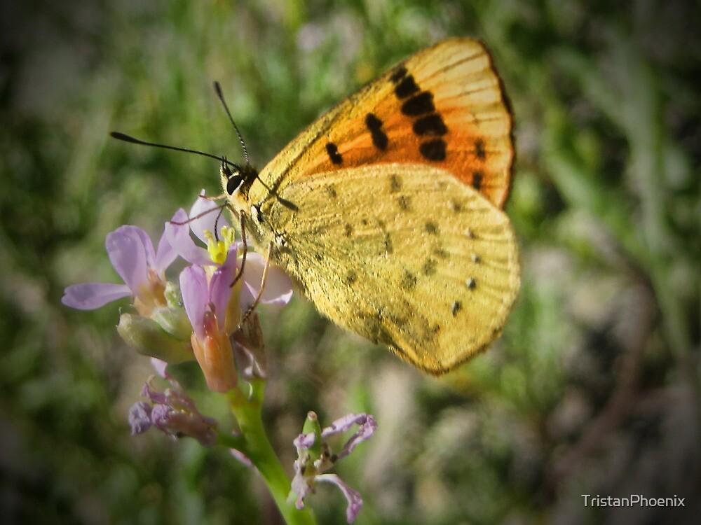 Le Papillon by TristanPhoenix