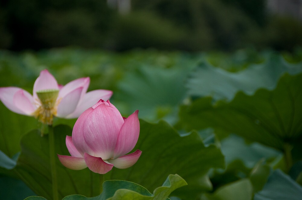 Lily in Ueno Park by Alex Dundon