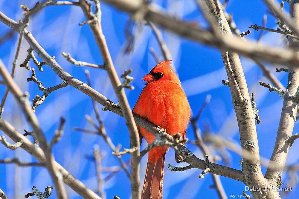 Red Of The Cardinal by Deborah  Benoit