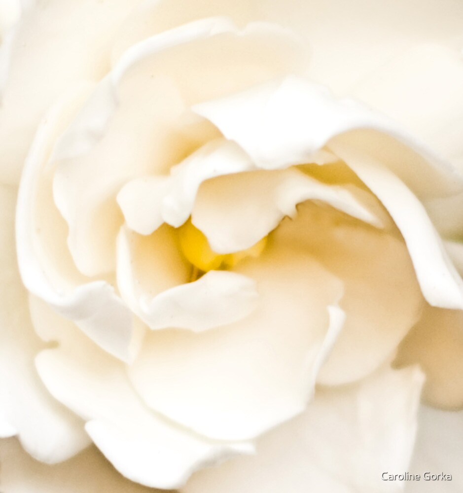 Buttermilk by Caroline Gorka