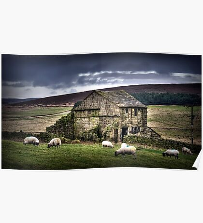 A barn and some sheep Poster