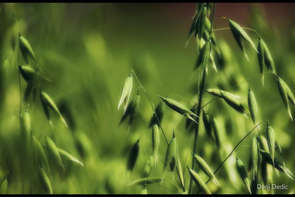 Definition of Green by Deni Dedic