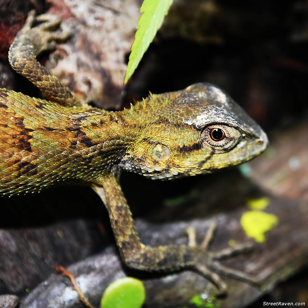 Tree Lizard Eye Close up by streetraven