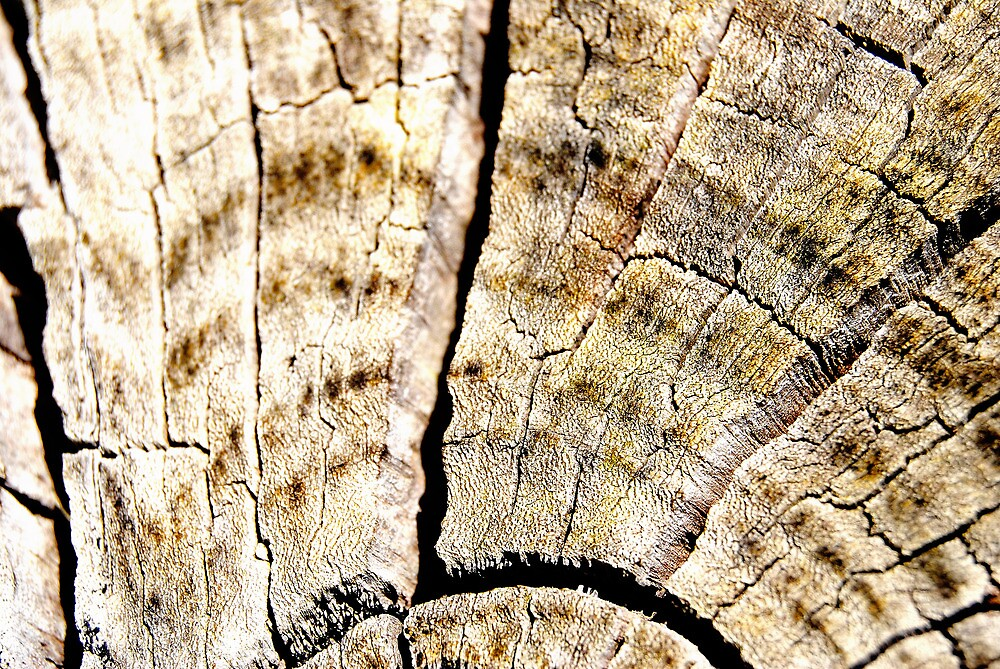 Old Log by Bas Van Uyen