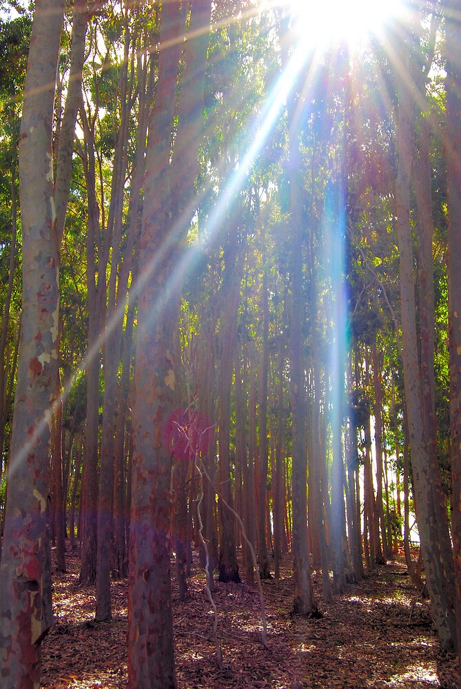 Heavenly Forrest by Bas Van Uyen