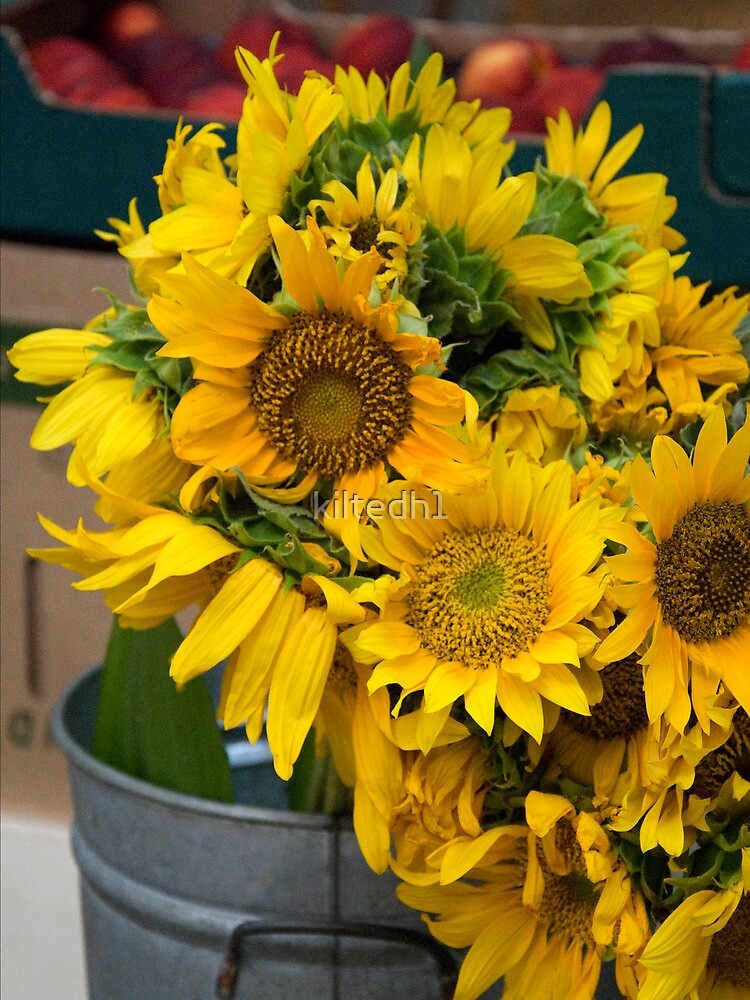 Sunflowers by kiltedh1