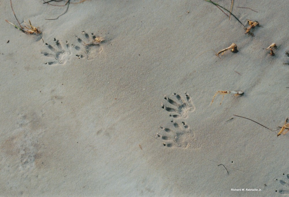 footprints by RicoR8Art