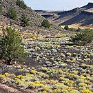 Somewhere in the Desert by Julia Washburn