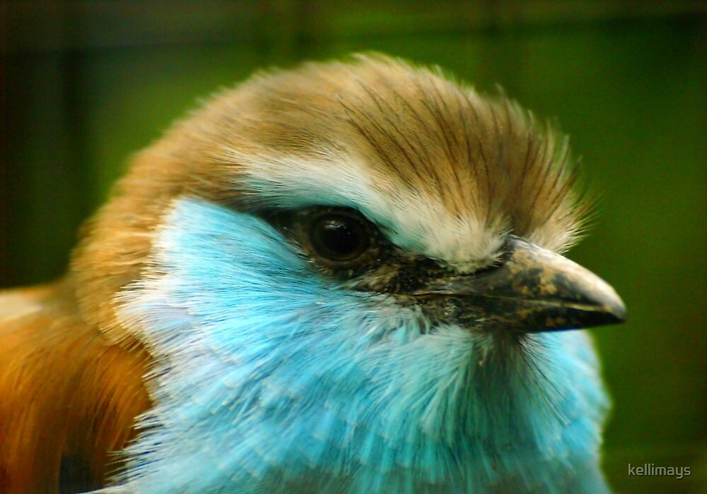 Blue and Brown Bird by kellimays