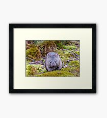 Furry Friend - Tasmanian Wombat Framed Print