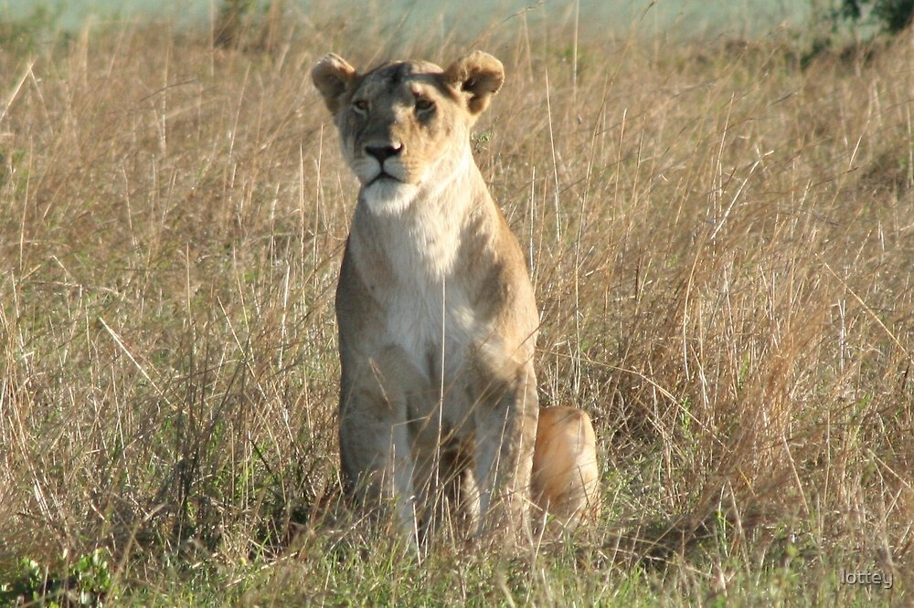 Lioness in the wilderness by lottey