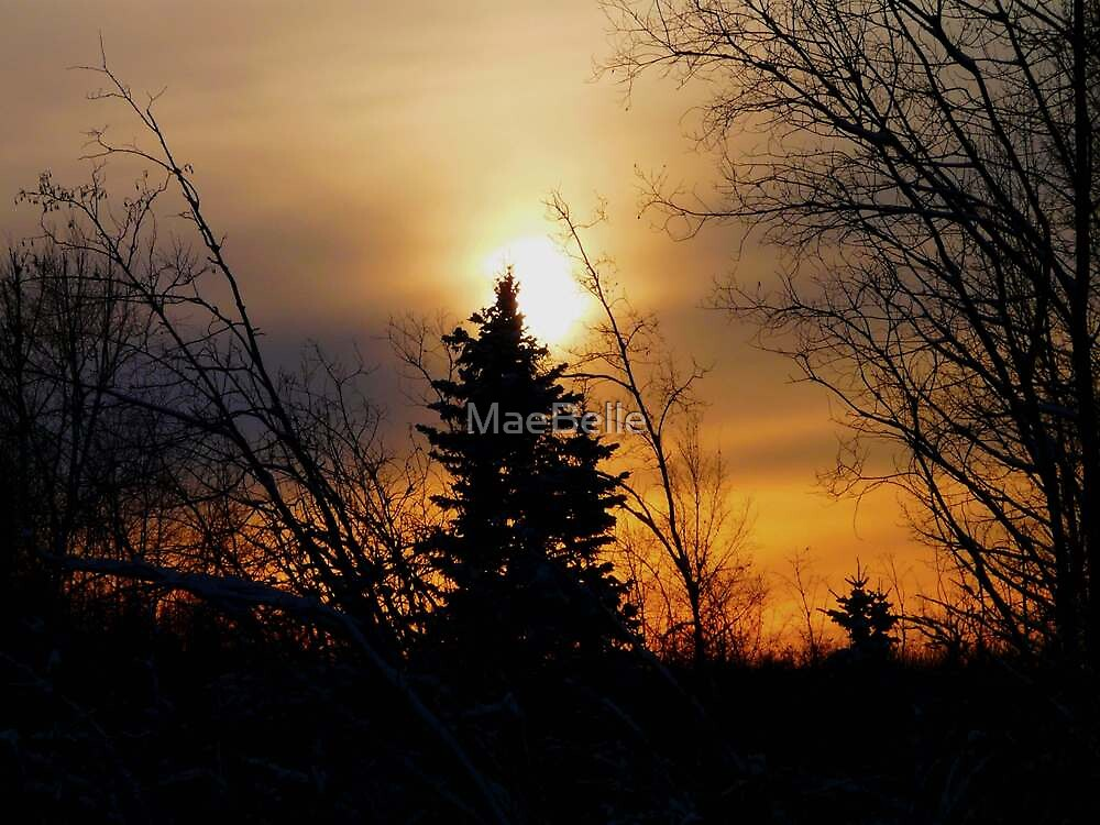 Sun Sitting on The Top of  a Tree by MaeBelle