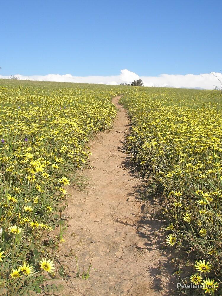 Daisy Trail by Petehamilton