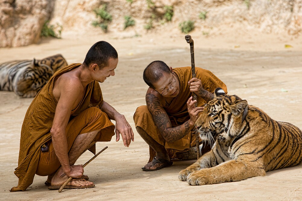 Monks caring by Anne Young