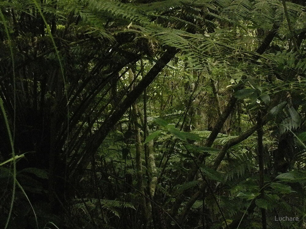 Forest New Zealand by Luchare
