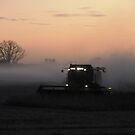 Bean Dust at Sunset. by SherryLynn58