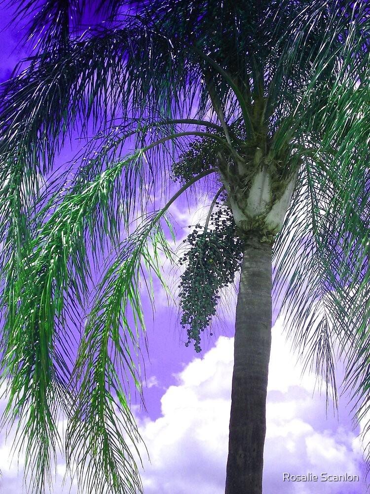Palm Tree Seeding by Rosalie Scanlon