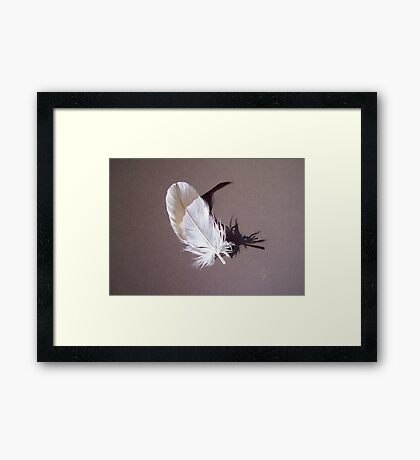 Feather & shadow #1 Framed Print