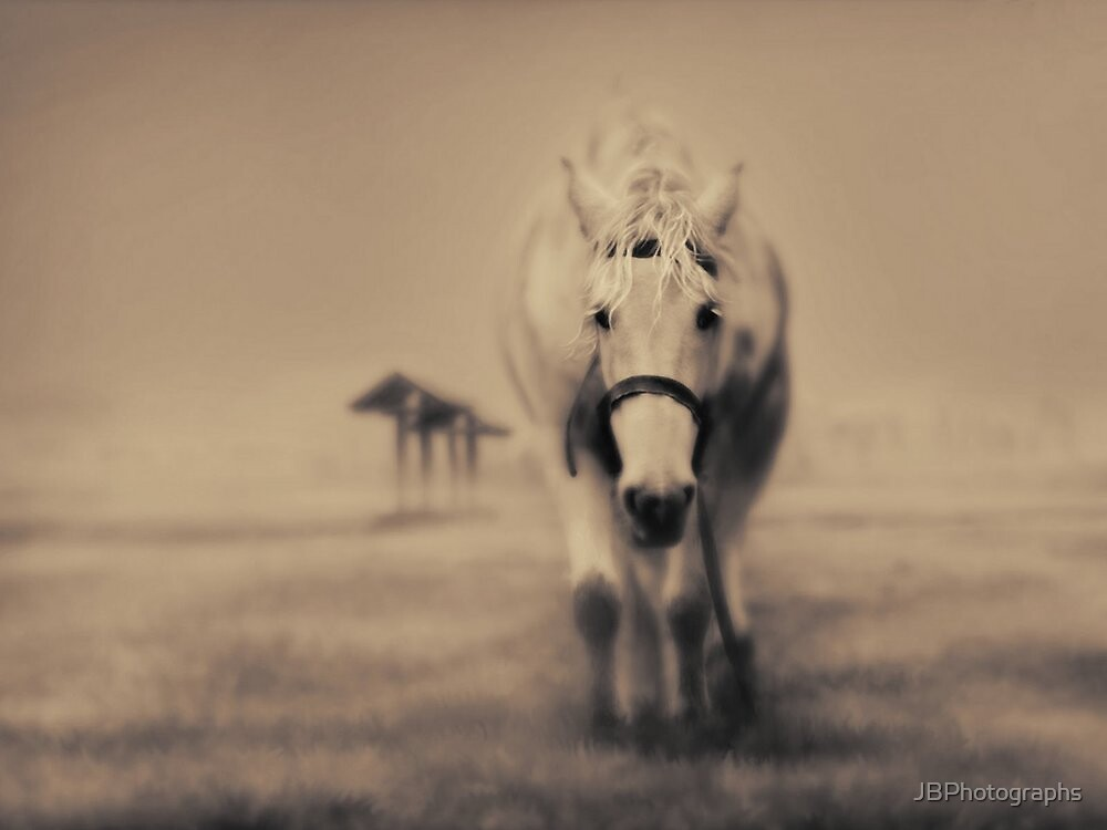 Wandering Horse by JBPhotographs