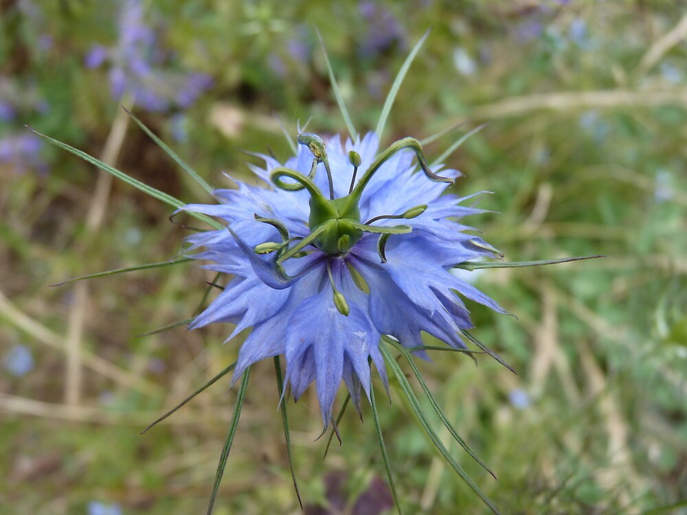 Beautiful in Blue by Meg Hart