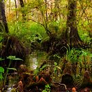 Mystical Swamp by Jim Haley