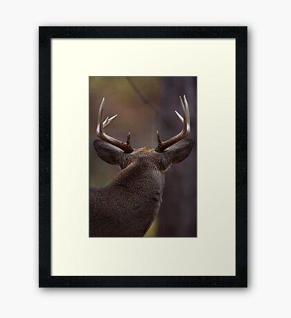 Don't look back - White-tailed Deer Framed Print
