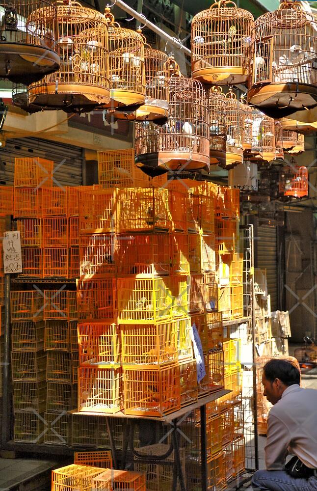 Hong Kong Bird Market by KLiu