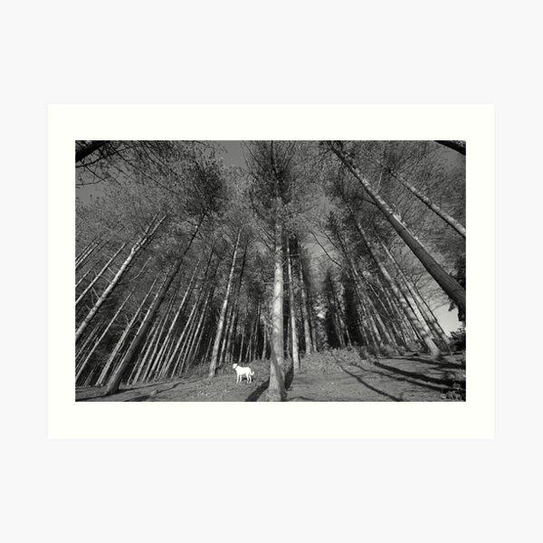 Thousand Trees Art Print