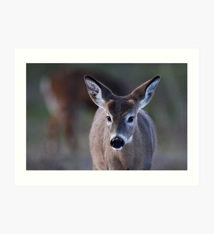 Pretty doe - White-tailed Deer Art Print