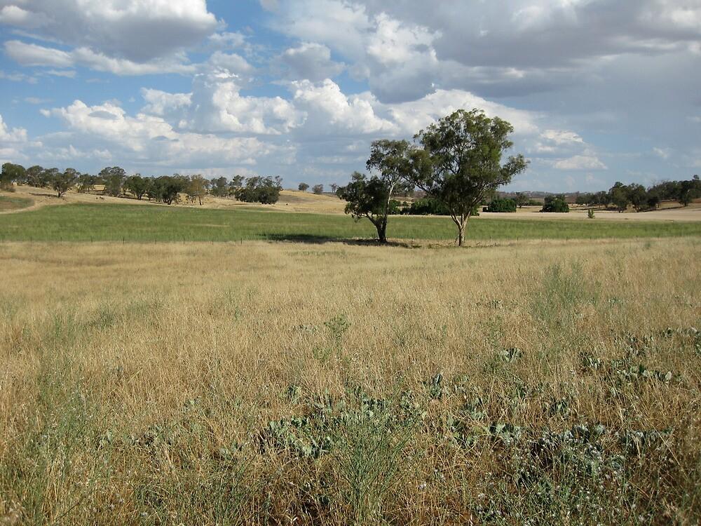 wiradjuri rolling hills by aboriginalart