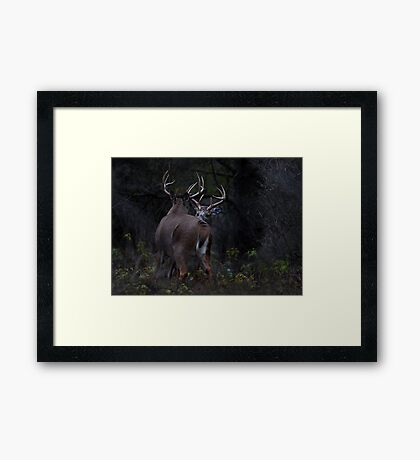 The Confrontation - White-tailed Deer Framed Print