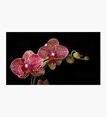 Orchid Flower Photographic Print