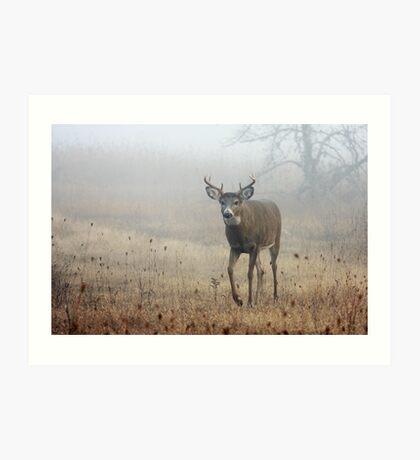 Coming through the fog - White-tailed Deer Art Print
