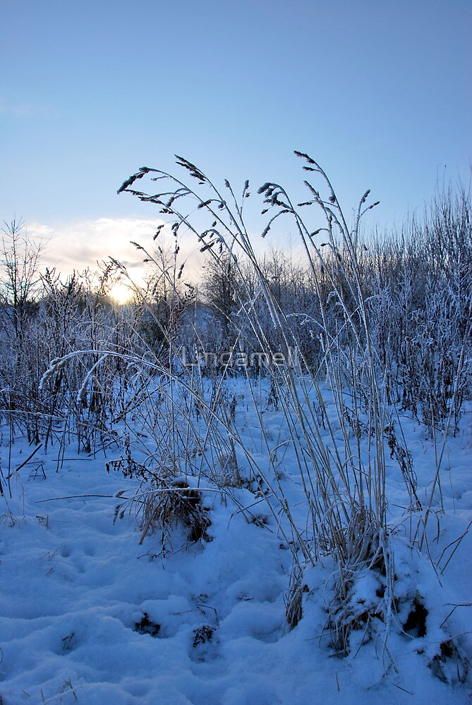 Winter Grasses by Lindamell