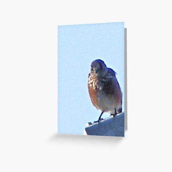 Robin on Rooftop #1b Greeting Card