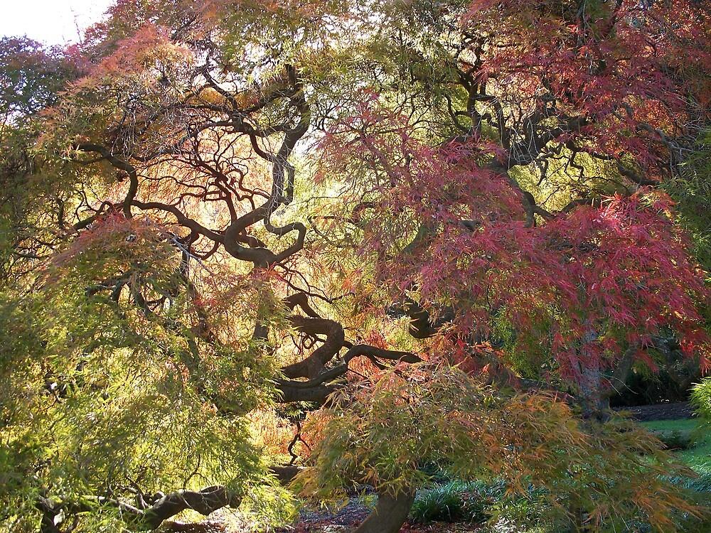 Tree  /  Holmdel Aboretum  by fiat777