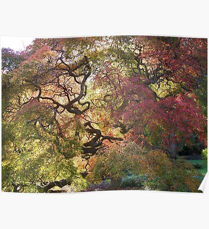 Tree  /  Holmdel Aboretum  Poster