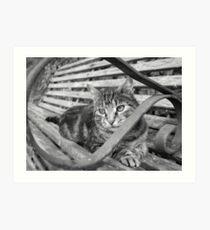Silver tabby black and white Art Print