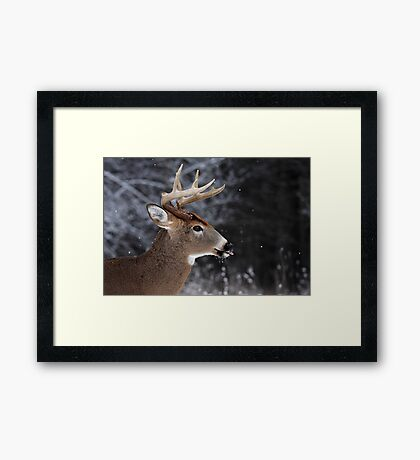 Catching Snowflakes - White-tailed Deer Framed Print