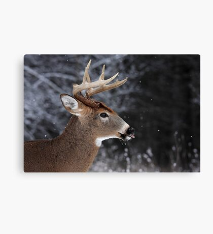 Catching Snowflakes - White-tailed Deer Canvas Print