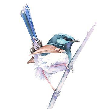 Superb Fairy Wren by Louisedemasi