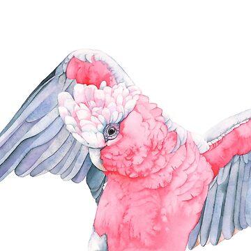 Wings by Louisedemasi