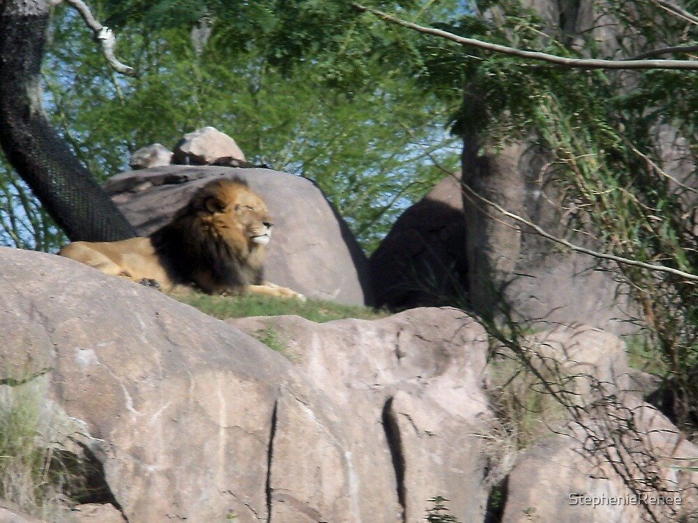 King of the Jungle by StephenieRenee